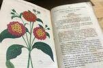 L'horticulteur provençal / journal des serres et des jardins 1854 / quelques gravures en couleurs h-t. Collectif