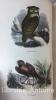 Le Buffon de la jeunesse. Zoologie - botanique - minéralogie par P. Blanchard. Revu, corrigé et augmenté par M. Chenu. Illustré de 100 planches ...