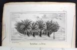 Aus Sahara und Atlas. Vier Briefe an J. Liebig.. DESOR E.: