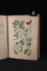Botanischer Bilder-Atlas nach De Candolle's Natürlichem Pflanzensystem.. HOFFMANN Carl: