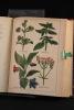 Plantes, remèdes et maladies ou la Médecine simple et facile à la portée de tous.. LEHAMAU P.-J.-L: