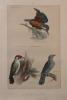 Les oiseaux. Description des principales espèces des oiseaux d'Europe.. [Anonyme]: