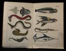 Naturgeschichte der Amphibien, Fische, Weich- und Schaalenthiere, Jusekten, Würmer und Stahlenthiere.. SCHUBERT G. H. V: