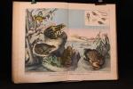Atlas d'histoire naturelle. Reptiles, poissons, mollusques, etc.. SCHUBERT G. H. de: