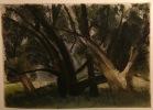 Une famille d'arbres.. RENARD Jules; GOURMONT Rémy de:
