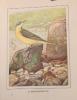 Les oiseaux dans la nature. 50 monographies d'oiseaux utiles.. RAMBERT Eugène - ROBERT L. Paul: