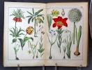 Atlas d'histoire naturelle illustrée. Végétaux.. GROENLAND J: