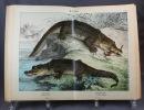 Naturgeschichte der Reptilien, Amphibien, Fische, Insekten, Krebse, Würmer, Weichtiere, Stachelhäuter, Pflanzentiere und Urtiere. Mit 479 kolorierten ...