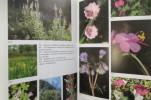 LE BOUQUET D'ATHENA. Les plantes dans la mythologie et l'art grecs.. Hellmut Baumann
