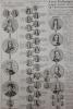 Carte historique et chronologique pour servir à l'histoire des provinces-unies des Païs-Bas.. Henri Abraham Chatelain (1684-1743)