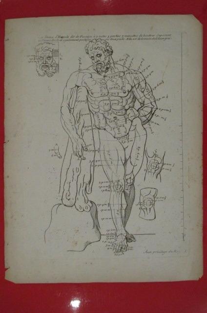 """""""La Statue d'Hercule dit de Farnese à 7 testes 3 parties 7 minuttes de hauteur suposant la figure droite et également posée sur ses deux pieds. elle ..."""