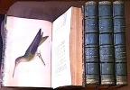 - Histoire Naturelle des OISEAUX-MOUCHES. - Histoire Naturelle des COLIBRIS, suivie d'un supplément à l'histoire naturelle des Oiseaux-Mouches. - ...