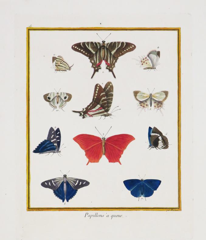 Papillons à queue.. MARTINET (François-Nicolas) & BUFFON (Georges Louis Leclerc, comte de).