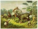 [CHASSE au RHINOCÉROS] Chasse aux rhinocéros.. BREIDWISER (Théodore).