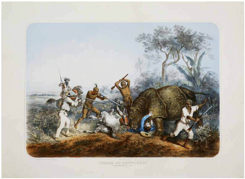 [CHASSE au RHINOCÉROS] Chasse au rhinocéros. Cap de Bonne Espérance (Natal).. GRENIER (Yves).