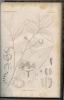 Flore et botanique de M. Tulasne. Louis Rene Tulasne