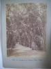 Allée de bambous au jardin d'essai d'Alger . Alexandre LEROUX
