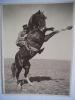 Cavalier et cheval cabré. Anonyme