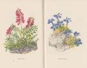 Die schonsten Bergblumen. . VOGEL (Traugott) & ROSHARDT (Pia)