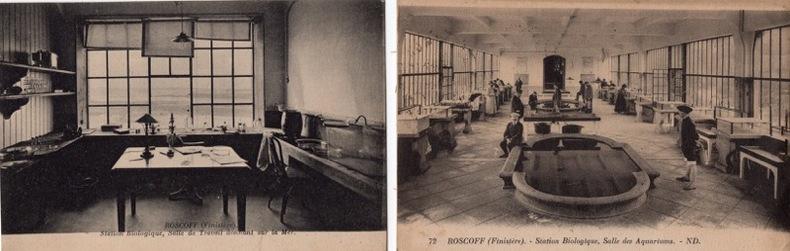 ROSCOFF - STATION BIOLOGIQUE. QUIMPER -