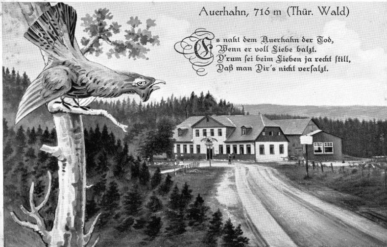 AUERHAHN . Allemagne