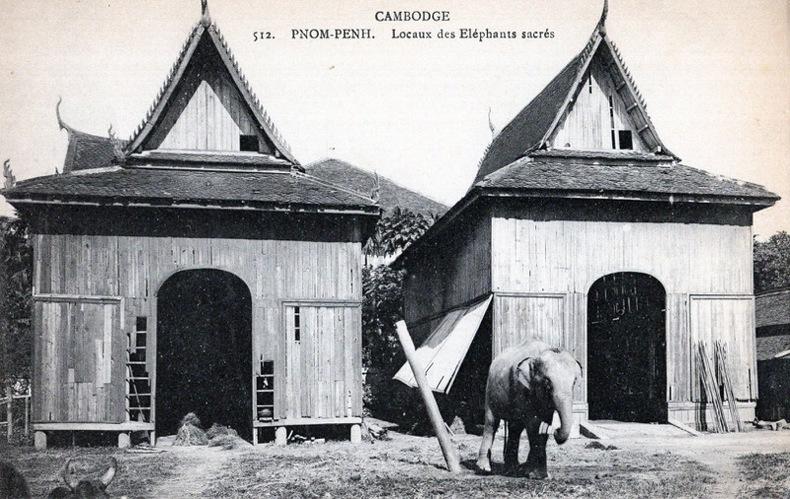 Cambodge, Pnon-Penh, locaux des Éléphants sacrés .. Cambodge