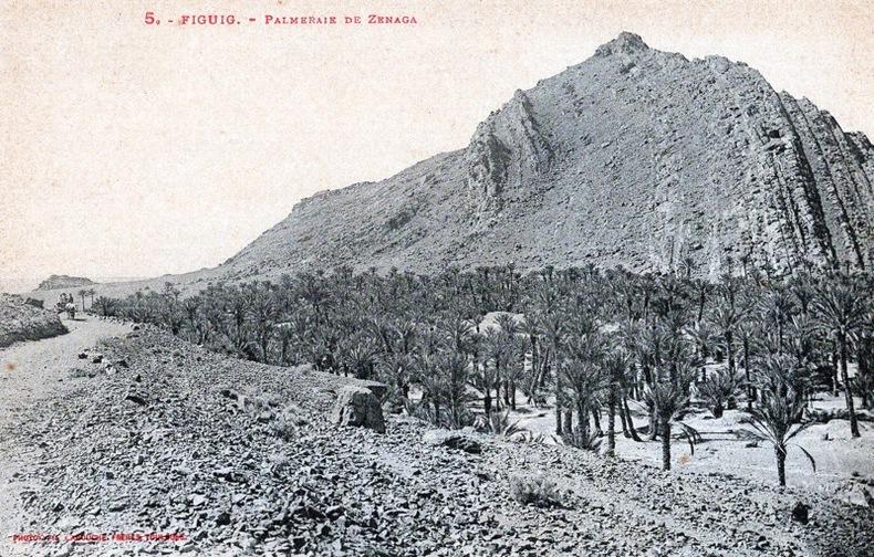 FIGUIG , Palmeraie de Zenaga . Maroc
