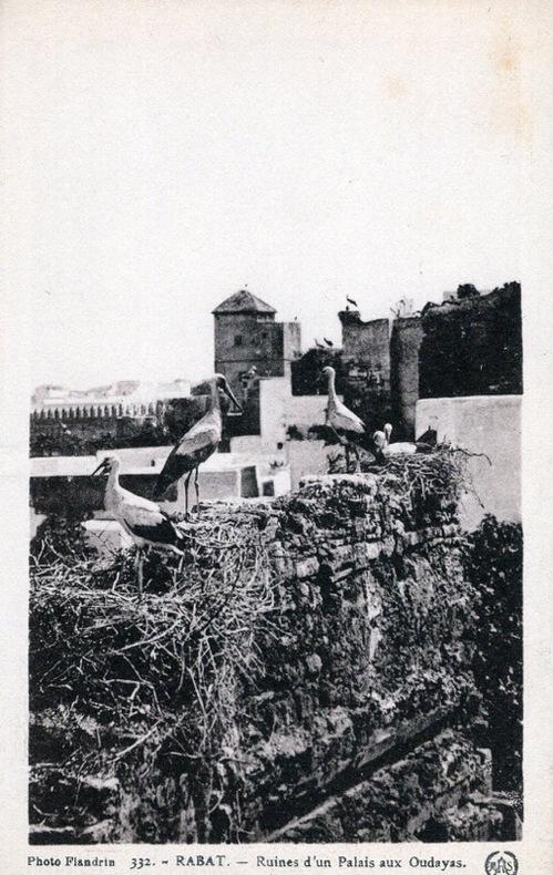 RABAT ,  ruines d'un palais aux Oudayas,. Maroc