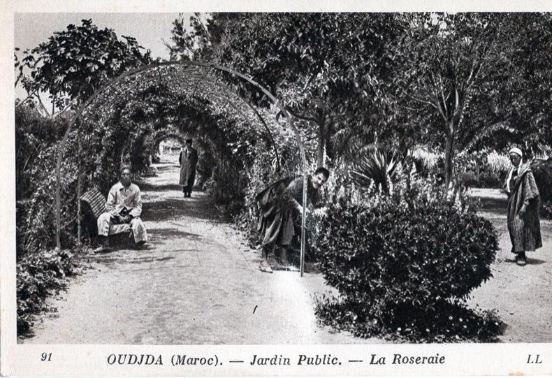 OUJDA, Jardin public, la Roseraie. Maroc
