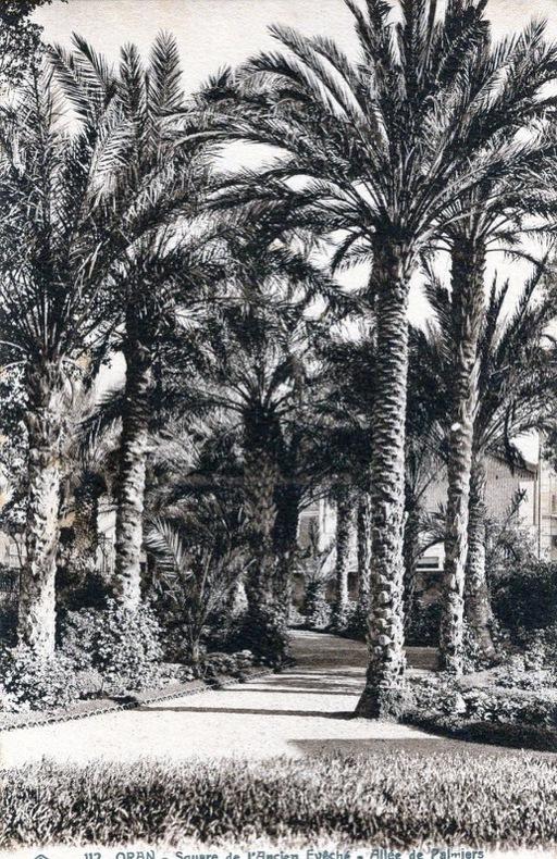 ORAN , Square de l'ancien évêché , allée de Palmiers .. Oran