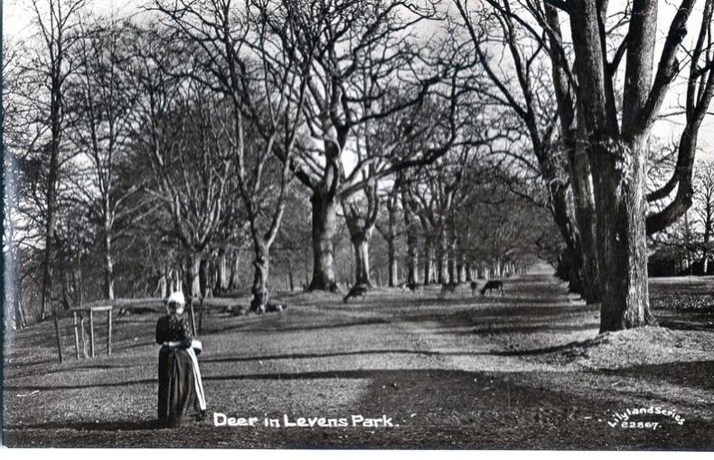LEVENS , Deer in Levens Park. Angleterre