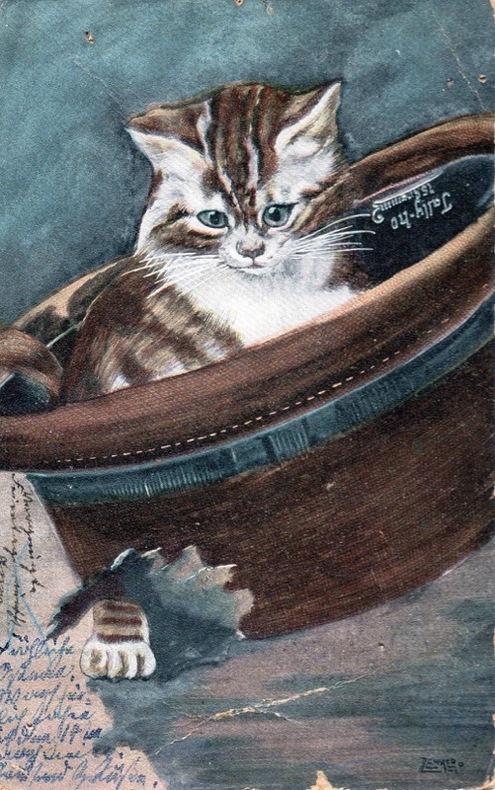 Chat dans un chapeau.