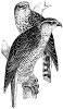 Une chasse au faucon.. DROUOT (Paul).