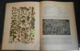 """Illustrierte Flora von Mittel-Europa Band V Teil 4 ? Dicotyledones - Sympetalae ? Labiatae et Solanac"". ""Gustav Hegi"""