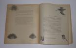 Bécasse, bécassines et petits échassiers. Le monde merveilleux des bêtes. Durel-éditeur. 1948.. OBERTHUR, Joseph