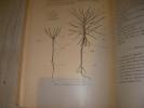 PRECIS DE BOTANIQUE FORESTIERE ET BIOLOGIE DE L'ARBRE EXPOSE SUIVANT UNE METHODE NOUVELLE ET COMPRENANT L'ANATOMIE ET LA PHYSIOLOGIE VEGETALES AVEC ...