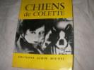 CHIENS DE COLETTE. COLETTE