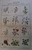 Manuel classique et élémentaire de botanique, d'anatomie et de physiologie végétale... par M. Louis Clerc,... . CLERC Louis.