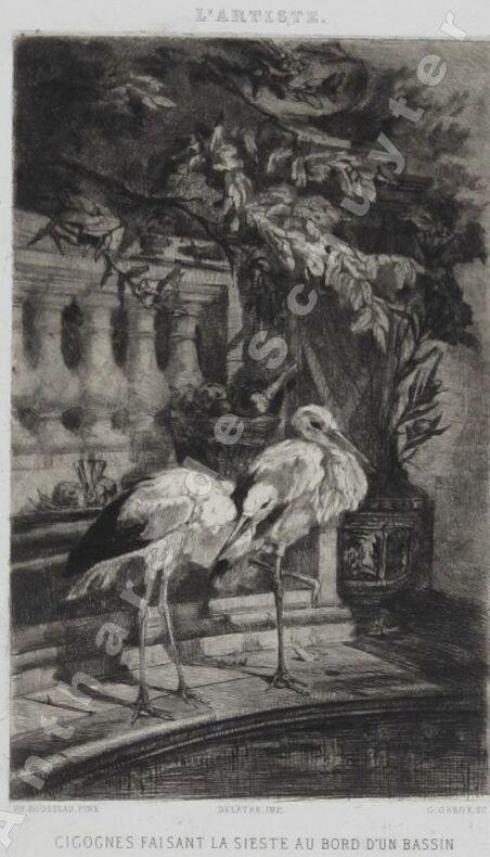 CIGOGNES FAISANT LA SIESTE AU BORD D'UN BASSIN. Ph. ROUSSEAU, dessin. - G. GREUX, gravure