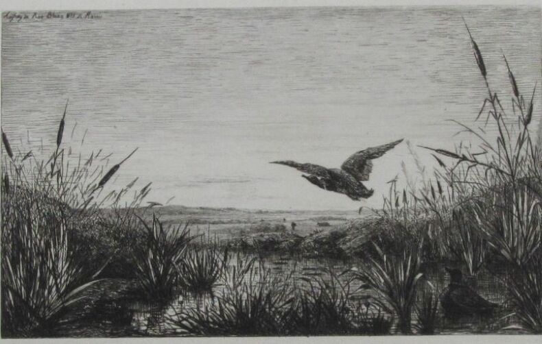 BHIAN 1873, LE MARAIS (L'envol du canard sauvage). Aufray (ou Anfray) de ROO