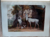 African Scenery and Animals. A facsimile reprint of the aquatint plates originally published in 1804-1805.. Daniell (Samuel).