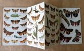 Petit Atlas des Papillons et des Chenilles. Tome II seul. .