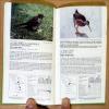 Oiseaux des Petites Antilles. Birds of the West Indies.. Benito-Espinal (Edouard).