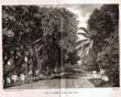 Voyage autour du monde : Java, Siam, Canton.. ( Asie ) - Beauvoir Ludovic Comte de.