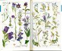 Guide des plantes à fleurs de l'Europe occidentale.. Mcclintock, D. et al.