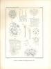 Der anatomische Bau der LaubblÀtter der Gattung Ranunculus.. Nestler, Anton