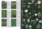 Fleurs et plantes d'europe. EspÚces herbacÃes et arbustes, comment les observer, les reconnaÃtre, les protÃger.. Godet, Jean-Denis