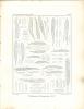 Systematische Bearbeitung der Pyrenomycetengattung Lophiostoma (Fr.) Ces. & DNtrs., mit BerÃŒcksichtigung der verwandten Gattungen Glyphium, (N.i.c.), ...