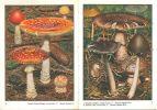 Les champignons dans la nature.. Jaccottet, J.