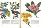 Flore des jardins.. MÃlzer, Vladimir